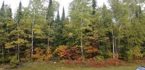 lac-seul-hunting-lodge-ontario