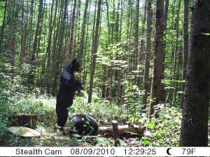 lac-seul-bear-hunting-lodge-ontario