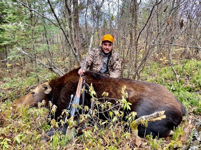 moose-hunting-cow-ontario